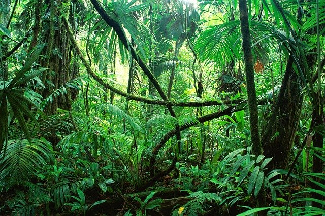 The jungle: definitely not arid.